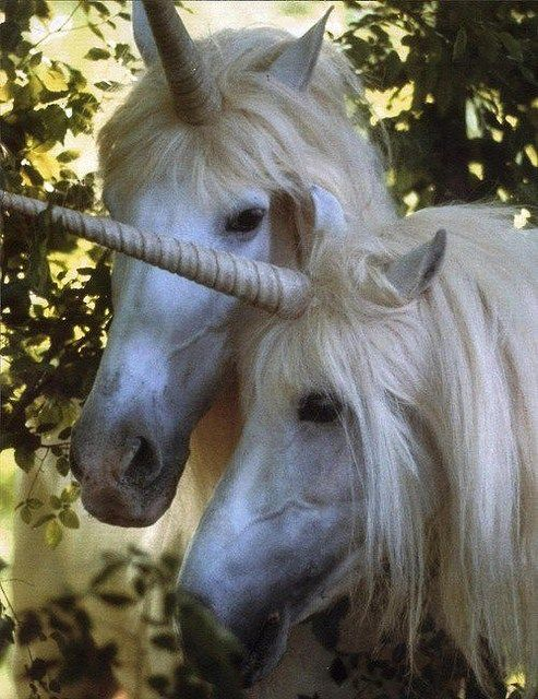 @:  Always be yourself, unless you have a chance to be a Unicorn...then be a Unicorn