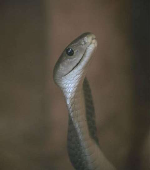 Nigerian authorities say they have procured anti-venom the substance used to treat poisonous snakebites from the UK and Costa Rica following months of acute shortages at snake bite treatment centres.  More than 200 people have died in the past month after from snake bites because of lack of available treatment.  Worst hit were Kaltungo in the north-east and Zamko in in the north with daily deaths of patients reported.  Health officials say 5000 vials of anti-snake venom are now being…