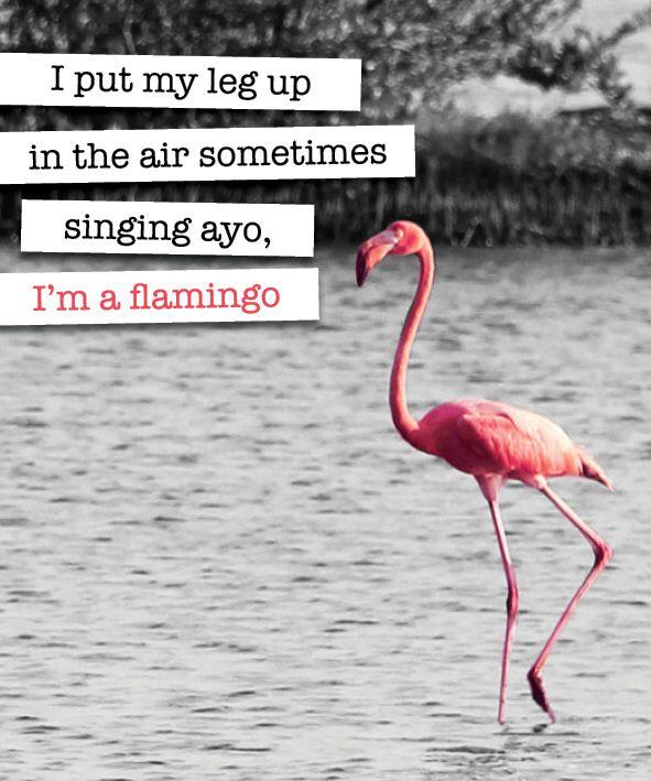 #flamingo #quote #beachblock | flamingo love | Pinterest ... - photo#3
