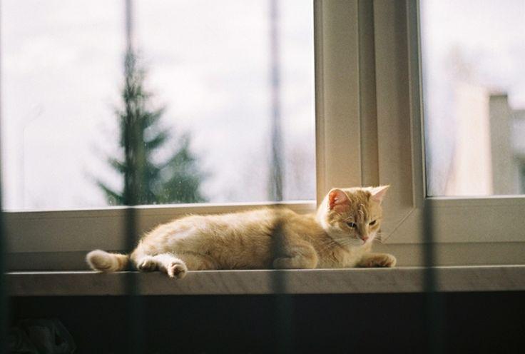 ant mackiewicz #lomo #photo #komwiz #ginger #cat