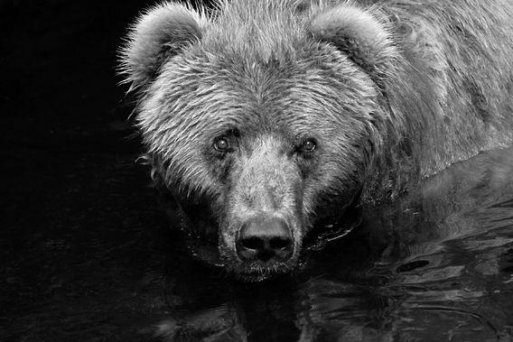 Verkocht op Werk aan de Muur: Curious bear