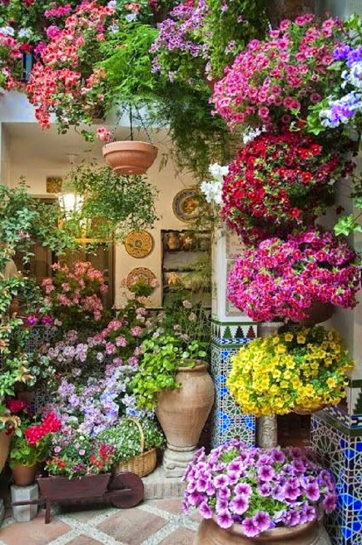 5536 best Flowers \u0026 Gardens images on Pinterest | Plants, Flowers ...
