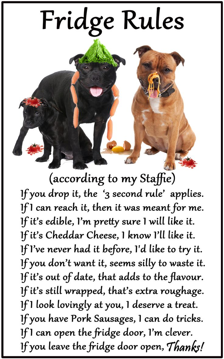 "Staffordshire Bull Terrier / Staffie - Humourus Magnetic Dog Fridge Rules. Size 6"" x 4"""