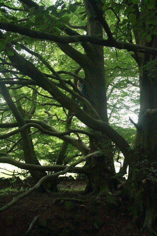 Es gibt nicht viele Wälder in England - aber es gibt besonders schöne. Hier im Norden nahe des Peak Districts.