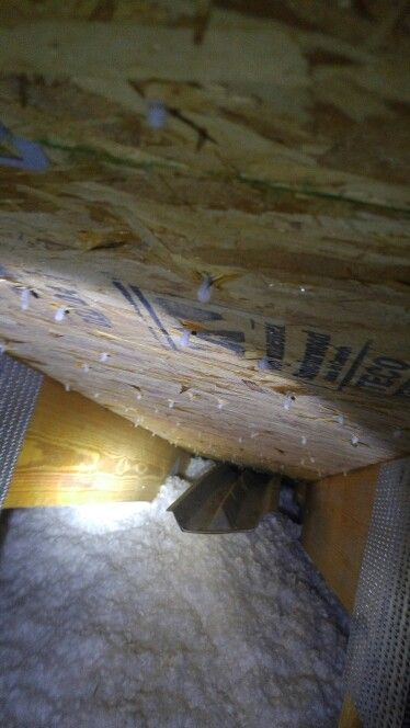 Moisture In An Attic Bathroom Fan Completed Projects Pinterest Fans Bathroom And