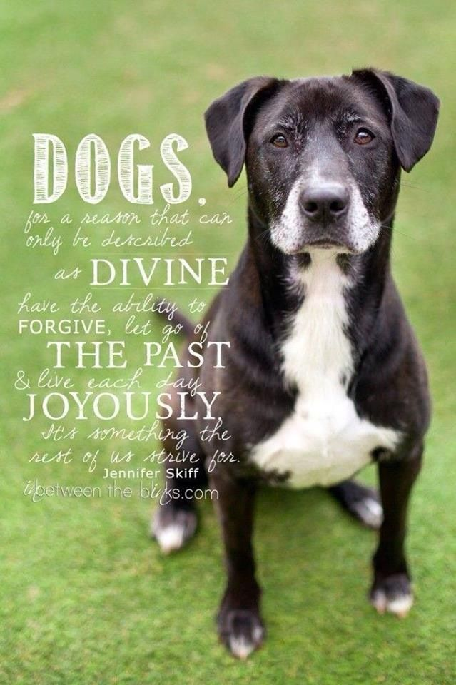 Be Like A Dog Quote