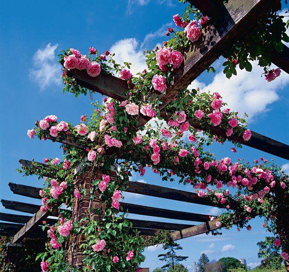Krzewy i pnącza w wspaniały sposób dekorują nasz balkon lub taras. Odpowiedni zadbane tworzą cos na wzór zielonej ściany, którą możemy podziwiać przez cały rok.  http://kwiaty.blogan.pl/