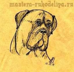 Мастер-класс по рисованию ручкой: Рисуем собаку Бульмастиф