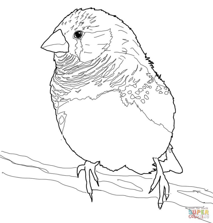 186 best aves images on pinterest birds embroidery for Finch coloring page