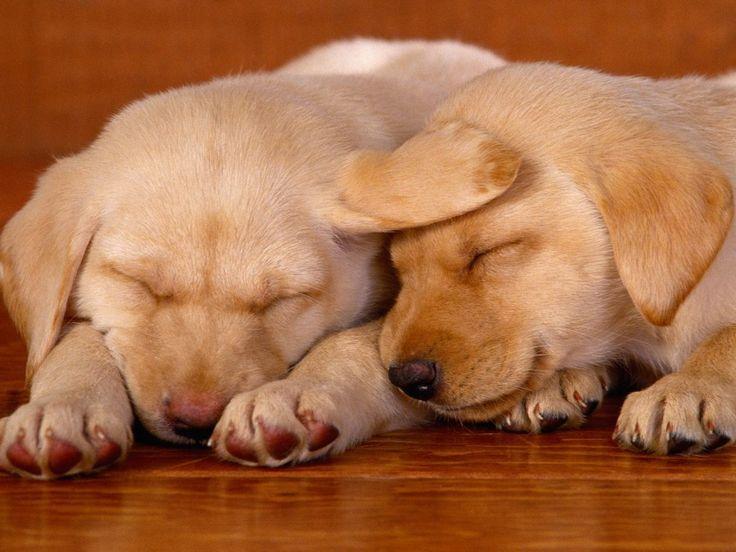Собаки - картинки для рабочего стола: http://wallpapic.ru/animals/dogs/wallpaper-14624