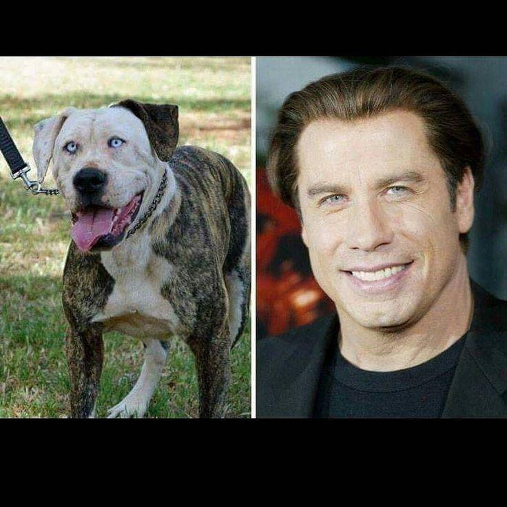 Bent up laughing at this #lookalike #johntravolta #pooch #dogsofinstagram #handsomedog