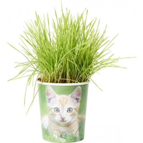 Kattegress i kopp