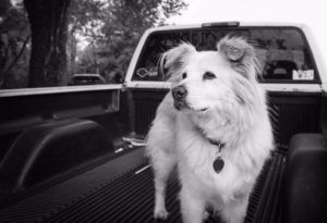 REST IN PEACE JAKE - Dierks Bentley says good-bye to his dog