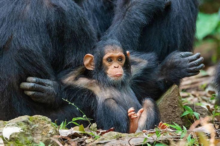 20+ Baby Animals que podem salvar seu dia sombrio   – tolle ( Kunst ) Bilder