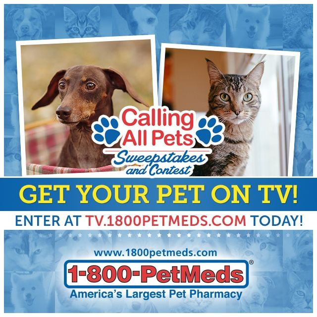 Redeem This Code And Take 20 Off Sitewide Free Shipping On Orders Of 49 At 1800petmeds Shop Now Animal Tv Birthday Quiz Your Pet