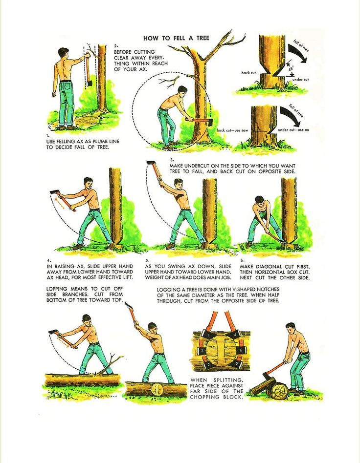 Indications on how to fell a tree from The Golden Book of Camping and Camp Crafts.