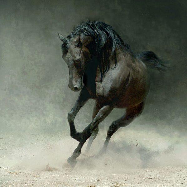 Fotos de caballos (impresionantes) - Taringa!