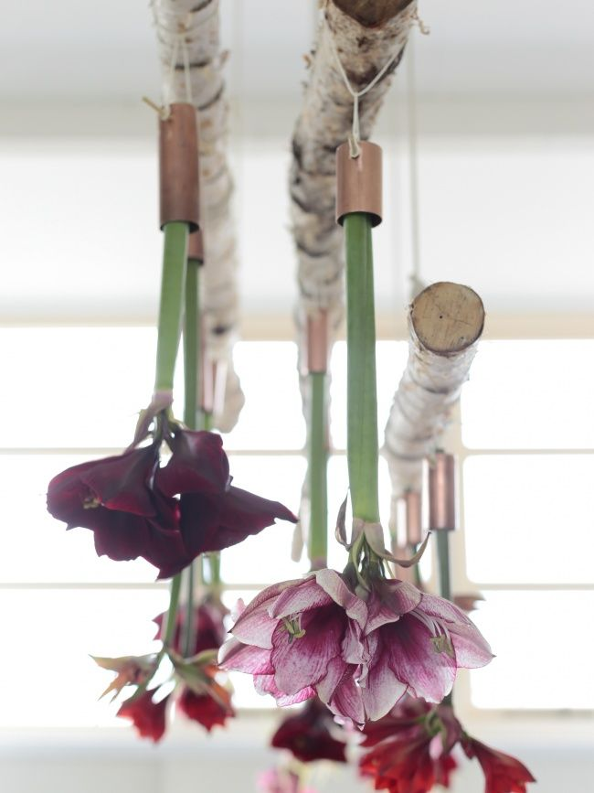 Create a gorgeous Amaryllis chandelier