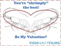 A Valentine's e-card for the shrimp lover in your life! Happy Valentine's  Day