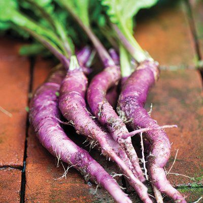 'Hinona Kabu' turnip
