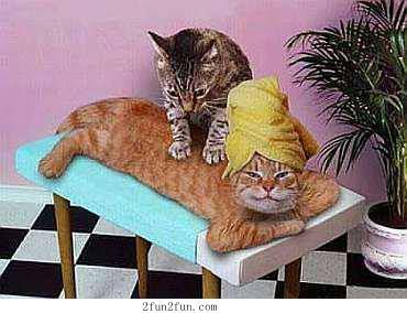 Cats Like Massages Too! Check Out Our Different Human Massages At  Www.thermae.