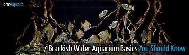 7 Brackish Water Aquarium Basics You Should Know