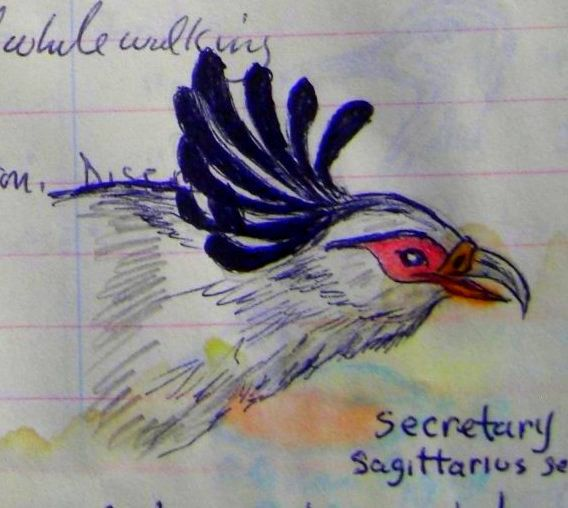 Secretary Bird,  color pencil & ball ponit pen, 1993