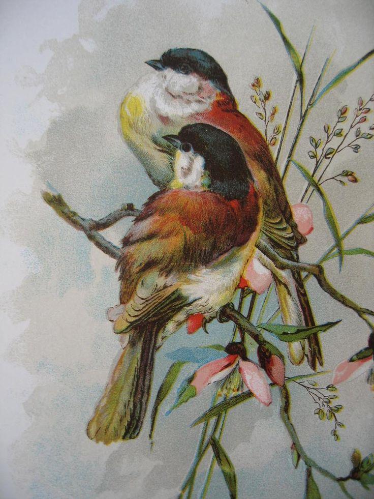 catherine klein prints c1890s 2 bird print s catherine klein chromolithograph from rubylane - Printable Bird Pictures 2