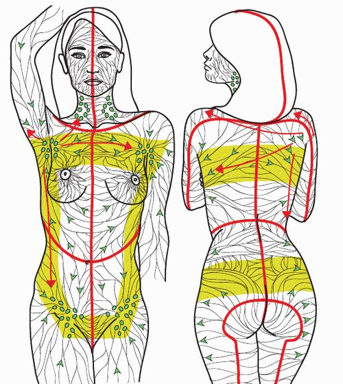 lymphatic system (with arrows!) | Come to Fulcher's Therapeutic Massage in Imlay City, MI and Lapeer, MI for all of your massage needs! Call (810) 724-0996 or (810) 664-8852 respectively for more information or visit our website lapeermassage.com!
