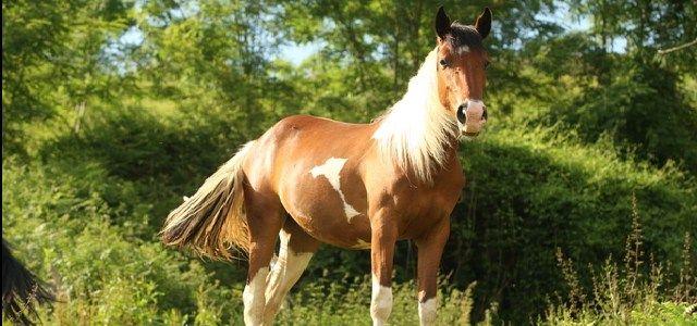 Ferme Equestre de Bertron - http://www.activexplore.com/activity/ferme-equestre-de-bertron/