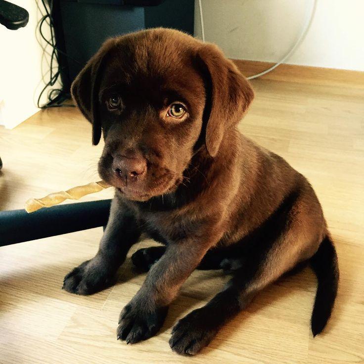 "21.9k Likes, 122 Comments - Puppies | Dogs | Pets (@puppyskit) on Instagram: ""Tongues out ❤ Follow: 🔥 @puppyskit Follow: 🔥 @puppyskit"""