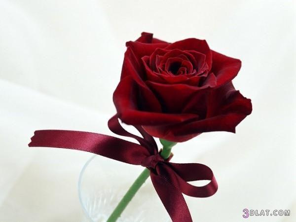 احمر ورود حمراء 2018 ورود جميله 3dlat Com 1406583851 Love Rose Images Beautiful Red Roses Red Rose Pictures