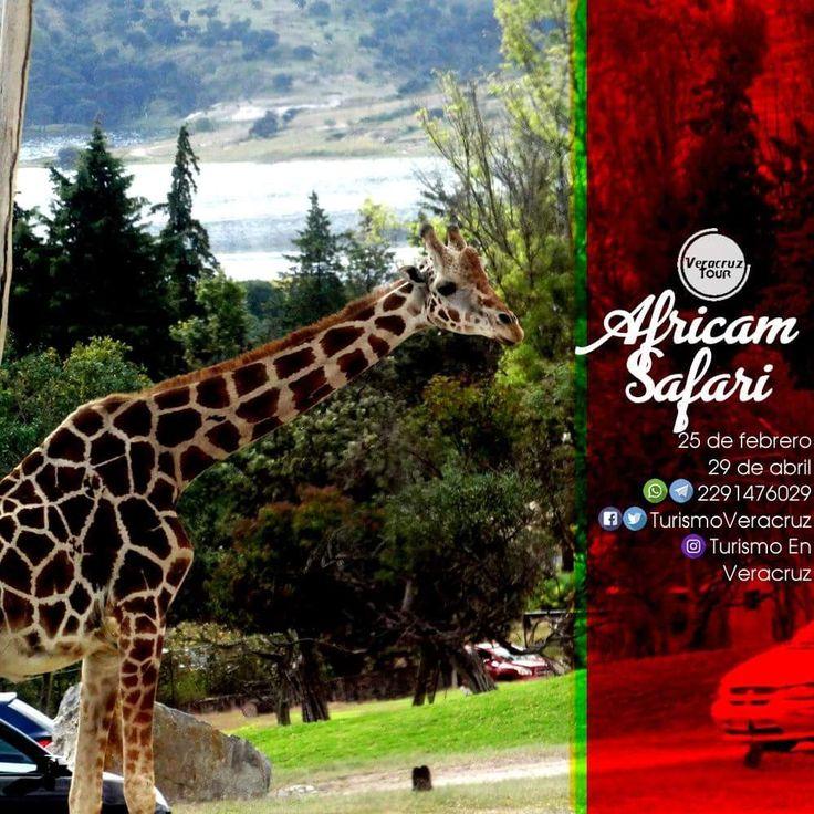 Vamos a #AfricamSafari y al centro de #Puebla este 25 de febrero  ¡ Reserva Tu Lugar YA ! Más información en: Tels: 01 (229) 150 83 16 WhatsApp / Telegram: 2291476029 Email: turismoenveracruz@gmail.com http://www.veracruztour.com/ecologico.htm #excursión #turismo #Veracruz #tour #Xalapa #Cardel