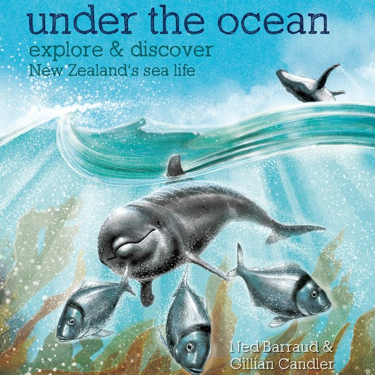"""""""Under the Ocean"""" - by Gillian Candler, illustrated by Ned Barraud – one title in the excellent """"Explore and Discover"""" series, taking a closer look at New Zealand's natural environment. Highly accessible text and illustrations to get lost in."""