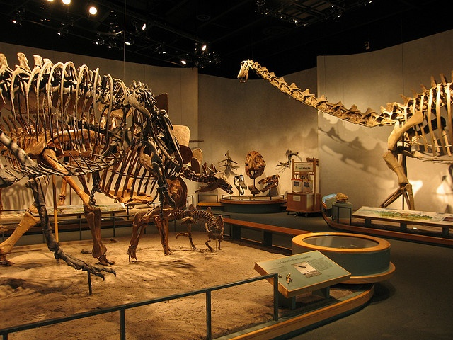 Denver natural history museum hours keyword after analyzing the system lists the list of keywords related and the list of websites with related content, in addition you can see which keywords most interested customers on the this website.