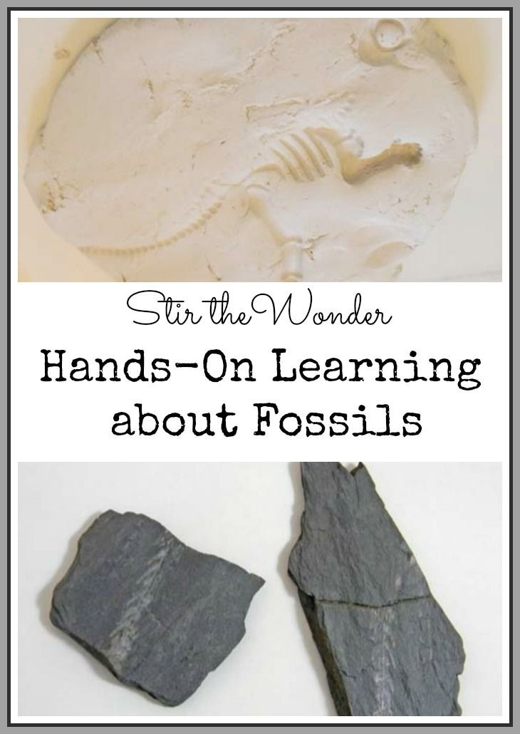 Where Do Fossils Come from How Do We Find Them Archaeology for Kids  Childrens Biological Science of Fossils Books
