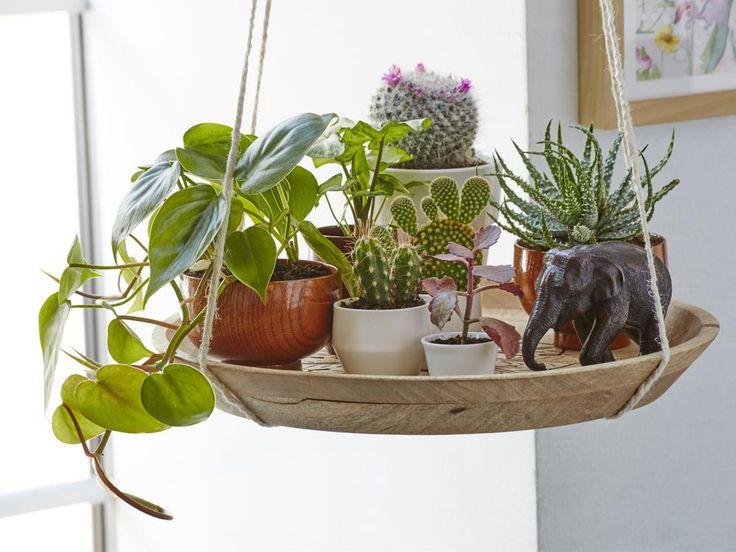 Die besten 25+ tropische Zimmerpflanzen Ideen auf Pinterest - tipps pflege pflanzen wintergarten