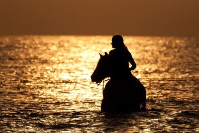 Deze zomer hebben we regelmatig gezwommen met de paarden op het strand bij Dishoek.  Het mooiste is natuurlijk om dit moment tijdens de zonsondergang te vangen op de gevoelige plaat.