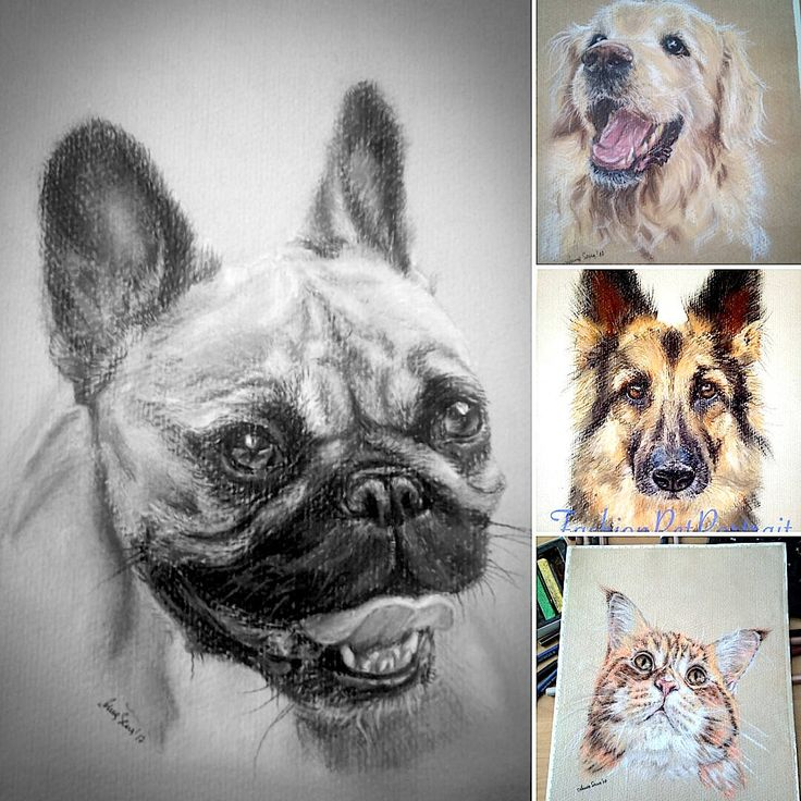 Custom dog portrait. Original Custom painting. Custom pet drawing. Portrait from photo Dog memorial Cat Gift idea birthday Christmas miracle french bulldog with tang by FashionPetPortrait on Etsy