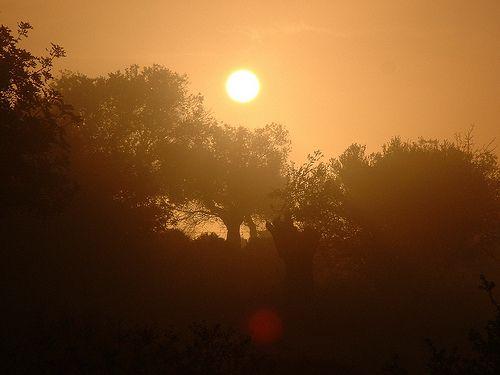 Misty autumn sunrise, Alonissos