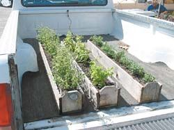 Planter boxes from reclaimed cedar fence boards