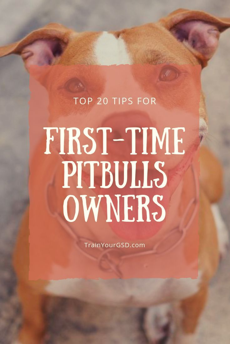 Pin On Pit Bulls And Other Dog Rescues