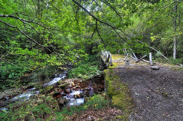 Archivo:Bosque de Muniellos 02.jpg