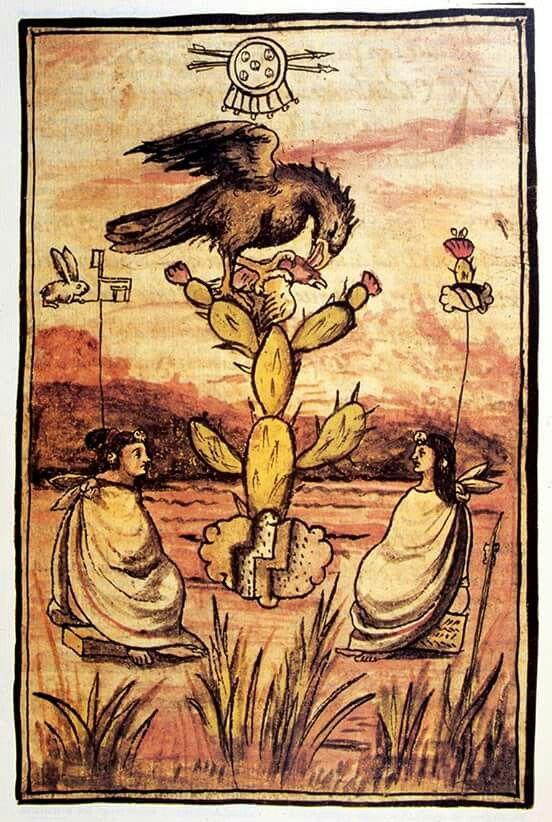 LA FUNDACIÓN DE TENOCHTITLAN  Tendremos que remontar varios siglos para situarnos en el momento en que los aztecas o mexicas, después de muchas peripecias, fundan su ciudad de Tenochtitlan en medio del lago de Texcoco. Esto ocurrió, según lo señalan varias fuentes históricas, hacia 1325 d.C. Tanto el mito como los datos históricos se entretejen para hablarnos de diversos aspectos relativos a la fundación de la ciudad. El primero de ellos es aquel que se refiere al encuentro del águila parada…