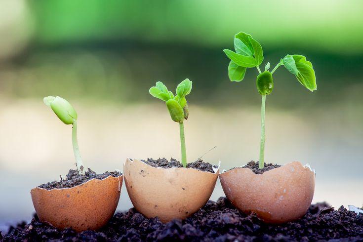 Har det börjat klia rejält i trädgårdsfingrarna? Nu är det snart dags att sätta igång för säsongen och med hjälp av de här fiffiga knepen kan du maximera chanserna att lyckas med dina...