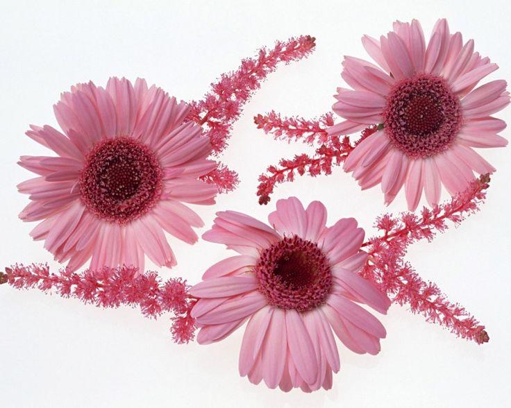 Wallpapers 33 pinterest hd download flower wallpaper backgrounds flower wallpaper desktop beautiful flower wallpaper hd rose flower voltagebd Images