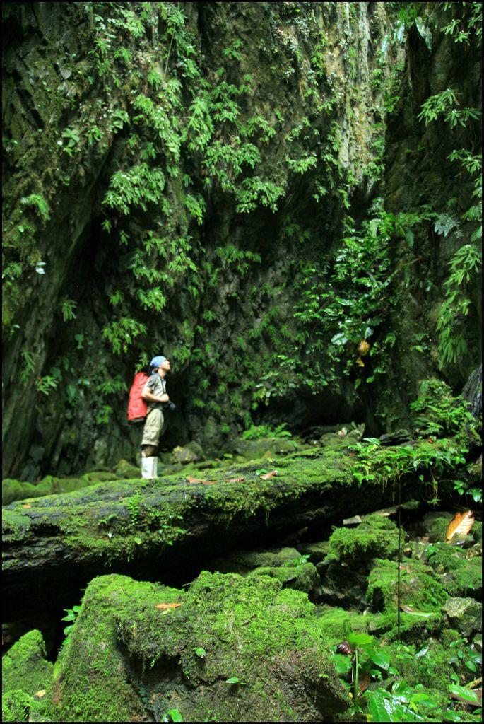 Good Luck cave, Mulu National Park, Borneo, Malaysia