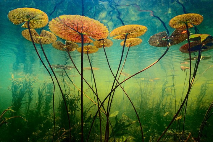 Love this, taken underwater in a pond in South Africa. From the 'National Geographic' site.