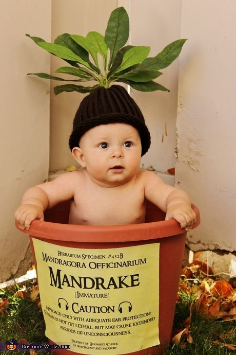 Funny baby costume ideas - Harry Potter Mandrake Baby Costume