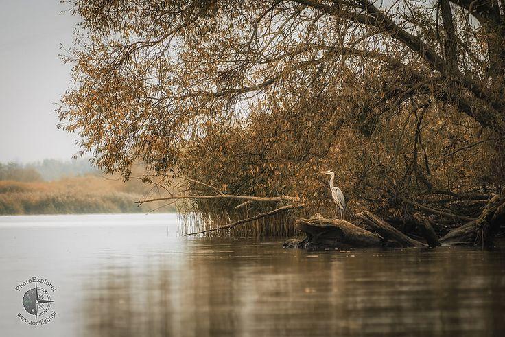 Jesień i czapla - Fauna